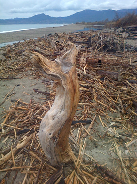 Souches et racines de bois flotté